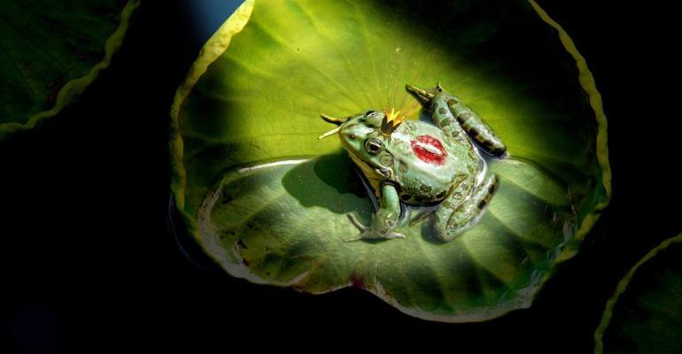 Frog-Prince-Lilypad.jpg