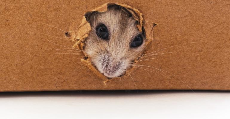 Mouse-Chew-Cardboard.jpg